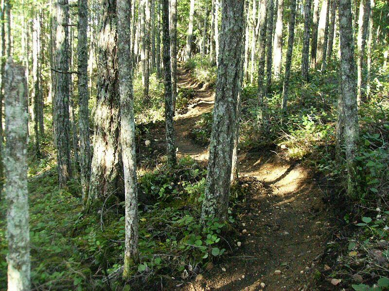 Niagara Region - Looking for trail tools.-evermore1.jpg
