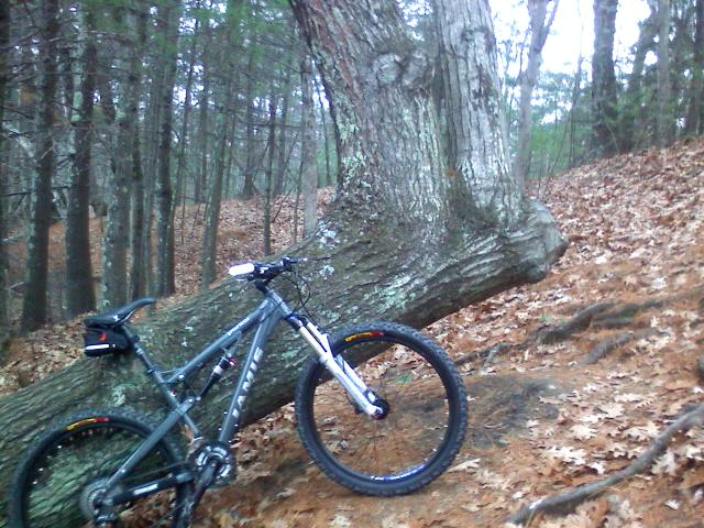 Mass Riders, Post Your Bikes/Where You Ride-evil-tree.jpg