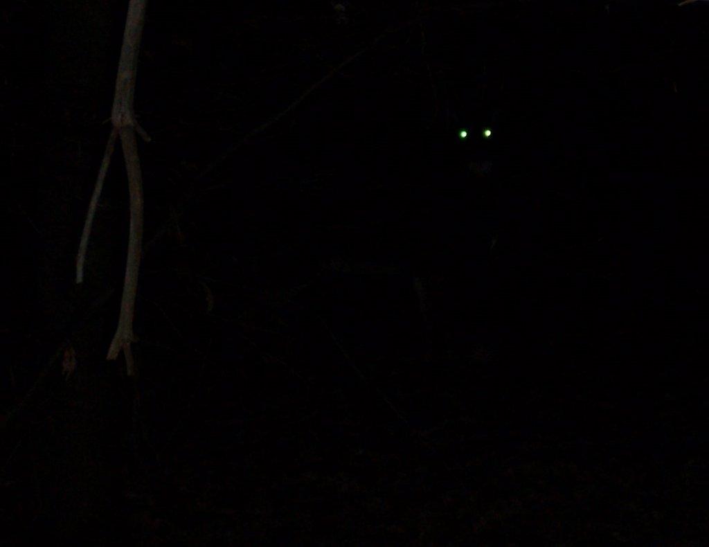few people ride at night?-eyes2.jpg