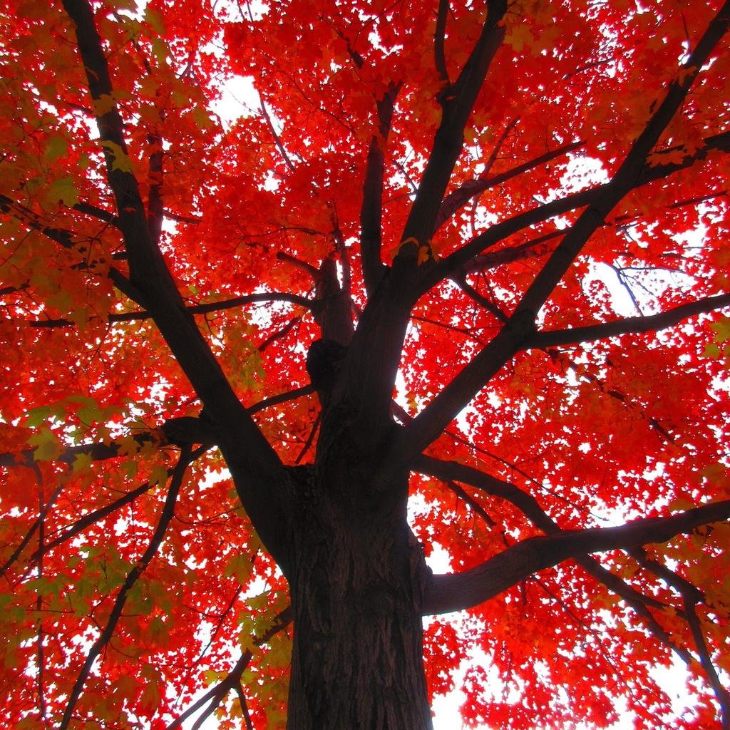 Botany Thread-fall-below.jpg