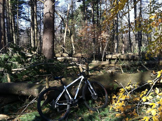 29ers In The Fall-fall1.jpg