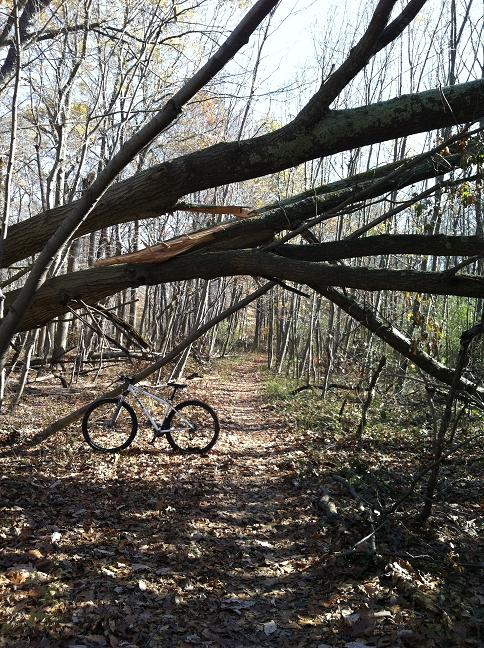 29ers In The Fall-fall3.jpg