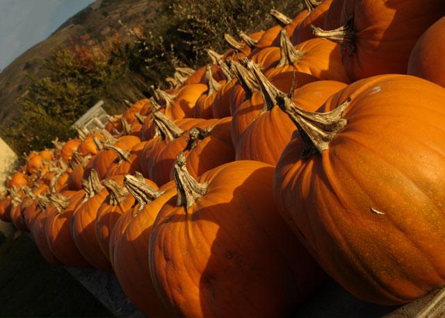 Assignment: Norcal Fall Photos-fall_pumpkins_med.jpg