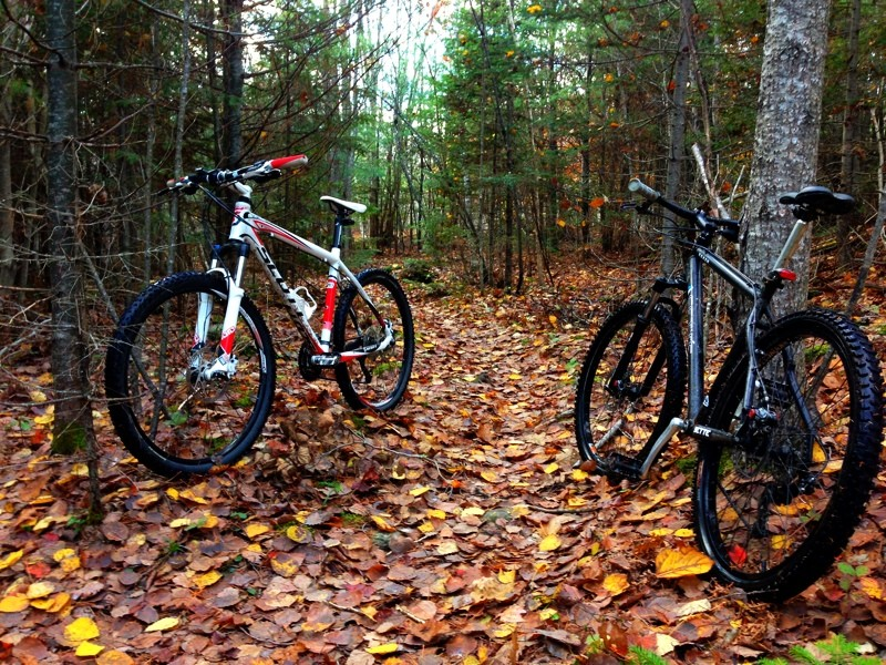 Post your SETTE photos here-fallbikes.jpeg