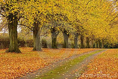 Name:  fallen-autumn-leaves-english-rural-track-15726415.jpg Views: 861 Size:  96.7 KB