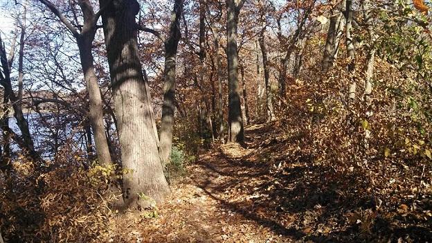 Post Pics of your Fall Foliage!!-fallfoliage.jpg