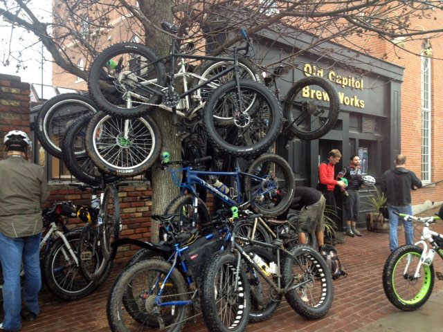 A Festivus for the Rest of Us:  The 3rd Annual MTBREC + Friends Holiday Ride (Dec 27)-fat-tree.jpg