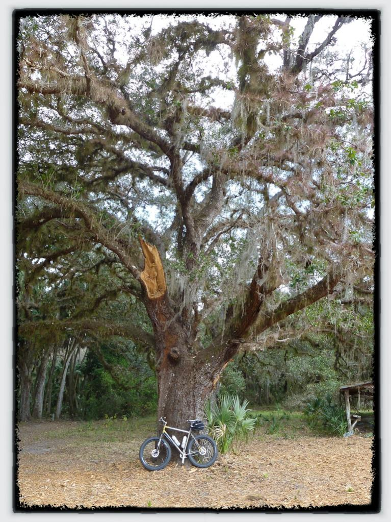 Marge Lite + Husker Du = love-fat-tires-fat-tree-2.jpg