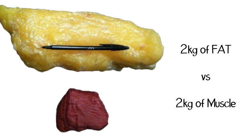 muscle is heavier than fat but by how much?-fat-vs-muscles.jpg