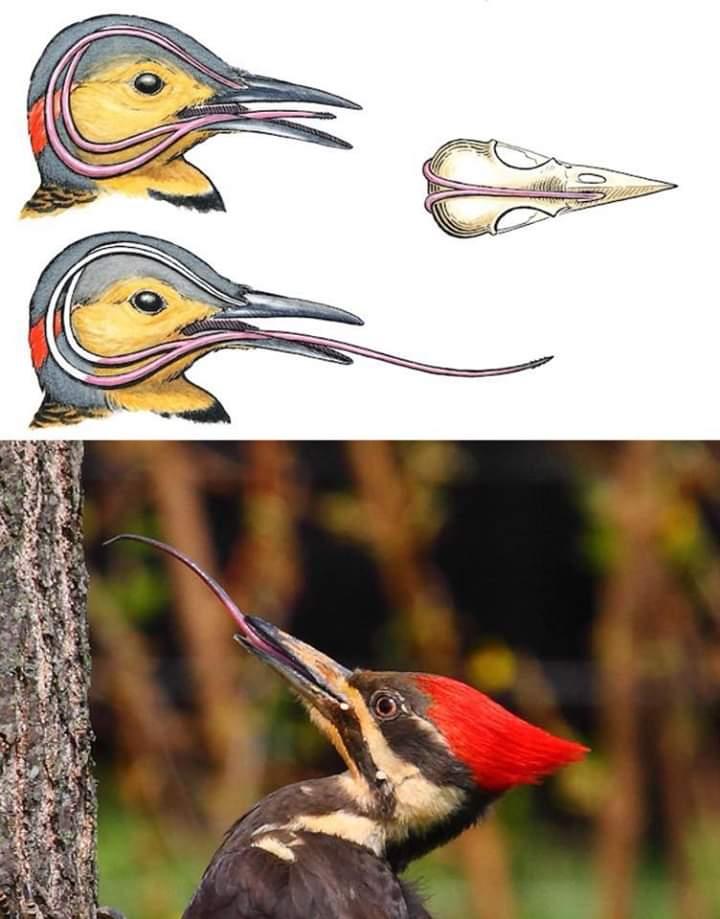 The Bird Thread...-fb_img_1540267319454.jpg