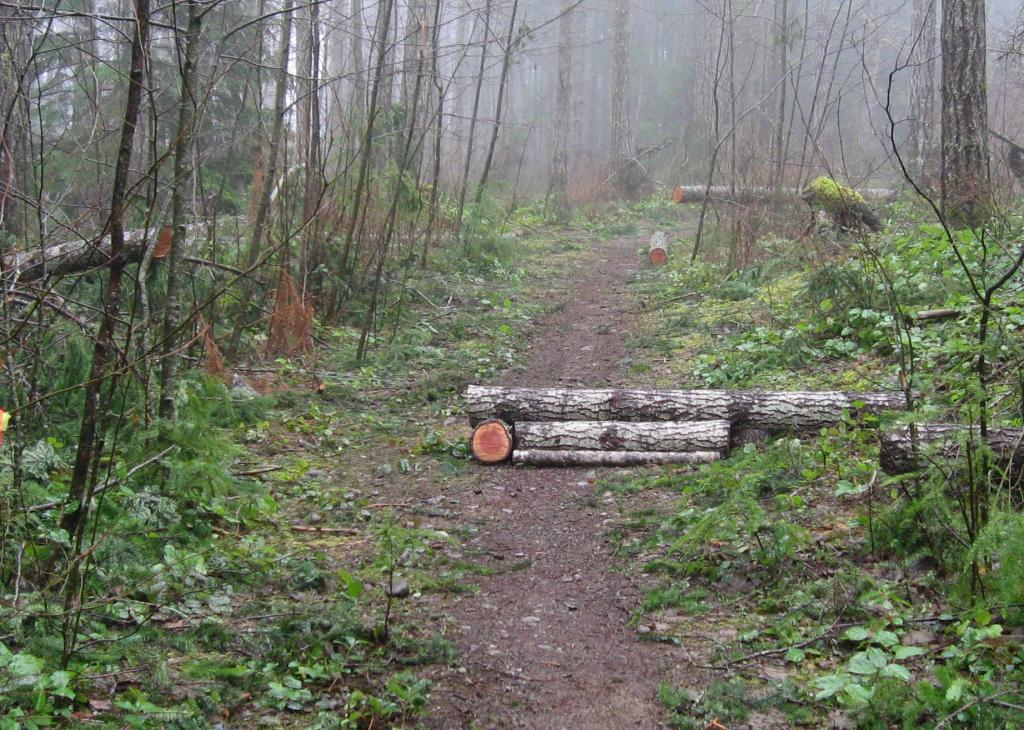 Log ramps: Good? Bad? And how best to build them?-feb8073.jpg