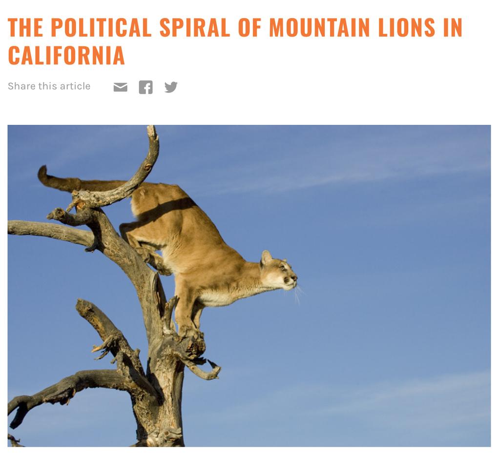 Mountain Lion Attack, Colorado.-fedc4376-81e0-4cb1-9f51-f40f2319cde5.jpg