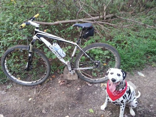 Post your dog with your single speed-fenway-singlespeed.jpg