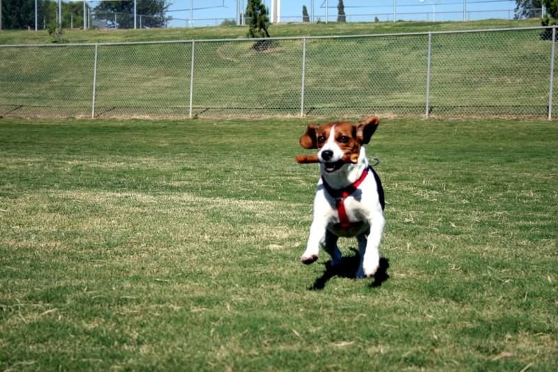 """The """"OFFICIAL"""" dog off leash thread-fetch4.jpg"""