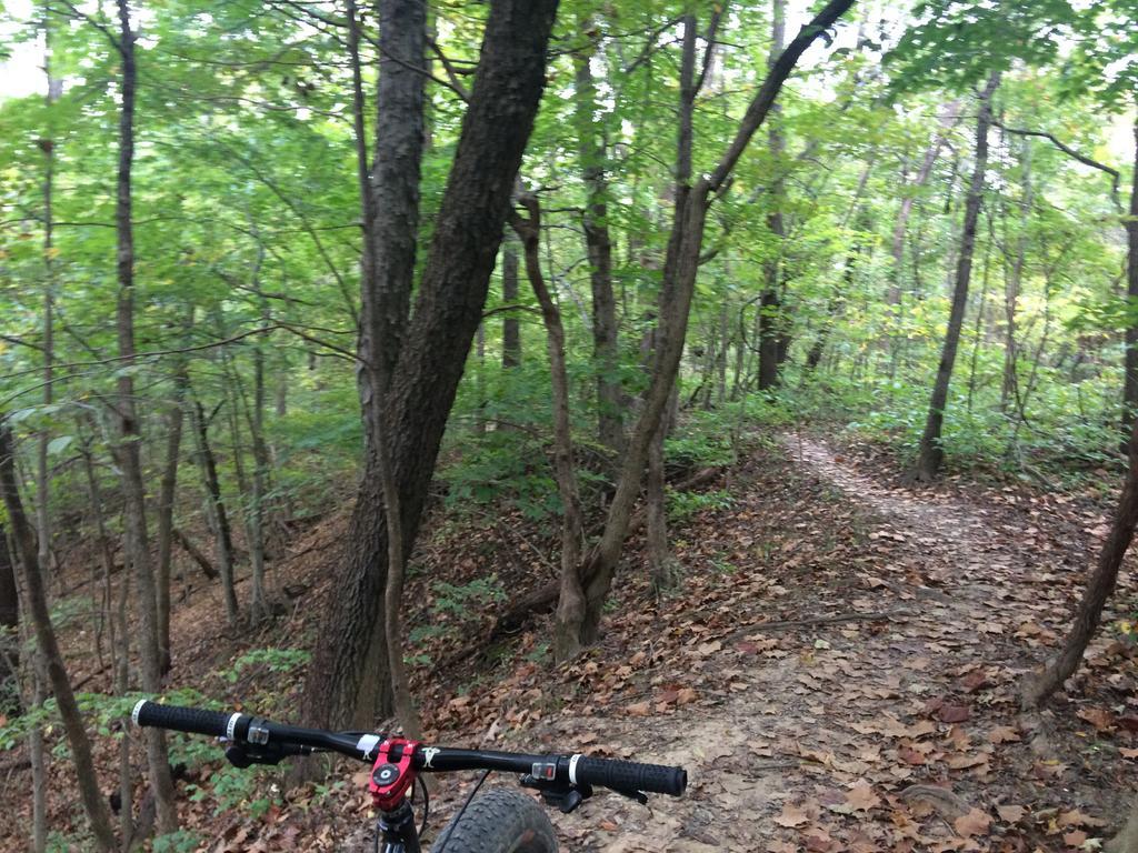 Fat Biking and health-file1-2-.jpg