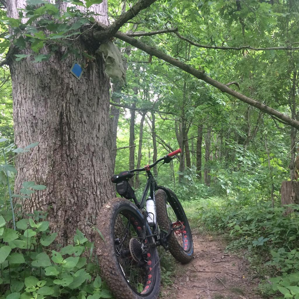 Fat Biking and health-file1.jpg