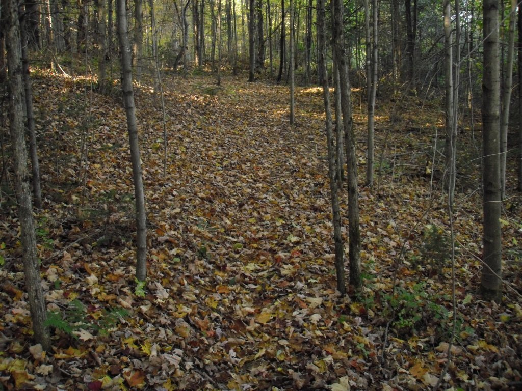 The real price of leaf blowing-find-trail.jpg