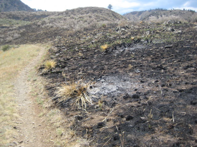 Picks of the Lory area...Timber Trail-fire-005.jpg