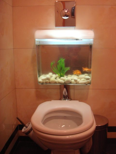 Toilet depth-fish-tank.jpg