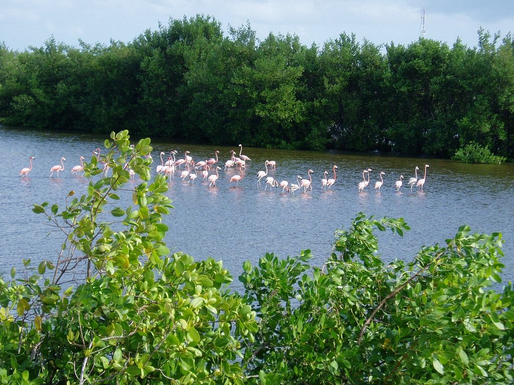 Off Road in Cozumel-flamingos-3.jpg
