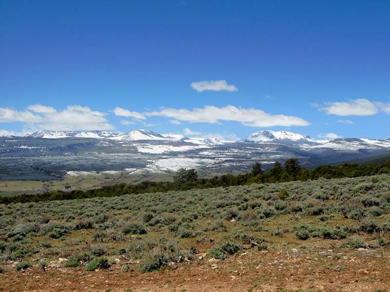 Trail Pics-flattops-b.jpg