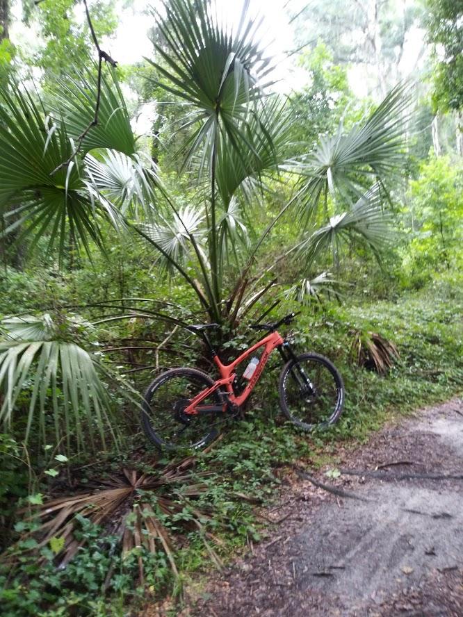 From Single Speeding to Smuggling!-florida-bike.jpg