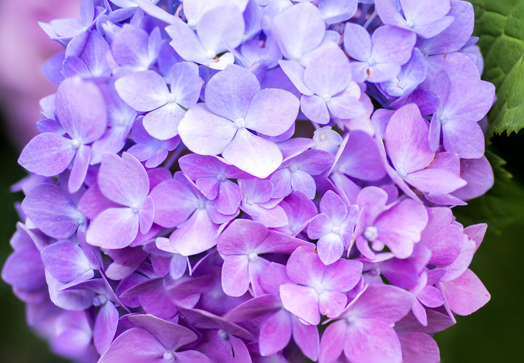 Macro Shots - little things made BIG-focus-stack-purple.jpg