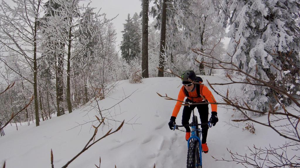 Camera for Fat Biking?-forest.jpg