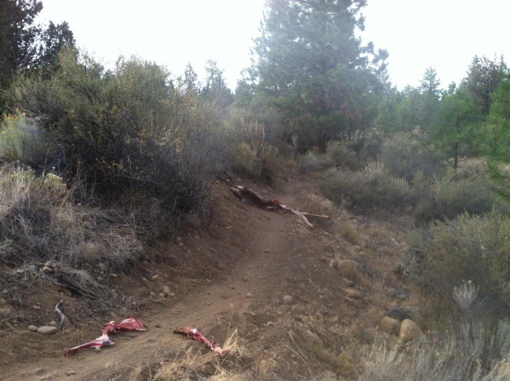 Deer Carcass on the Trail - Sisters - Peterson Ridge-foto.jpg