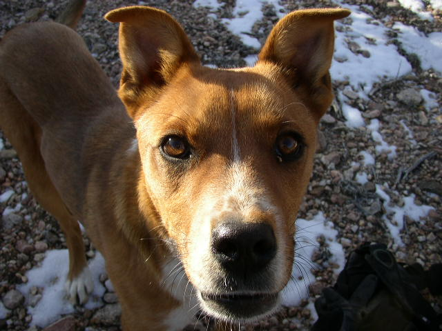 Found a Nambe Nugget-found-dog.jpg