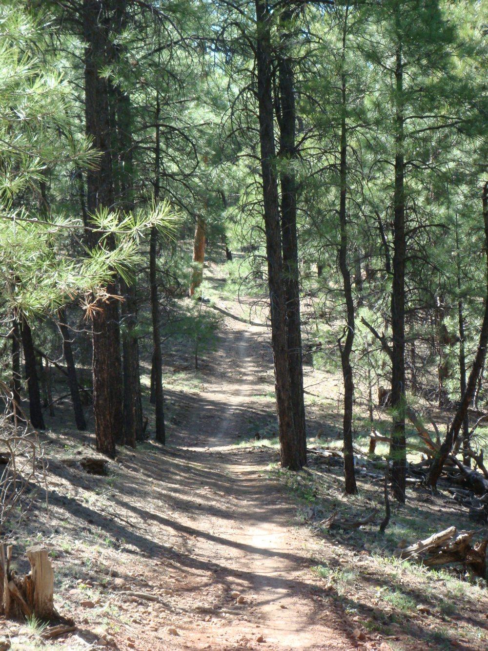Flag Trail Updates-fp14.jpg