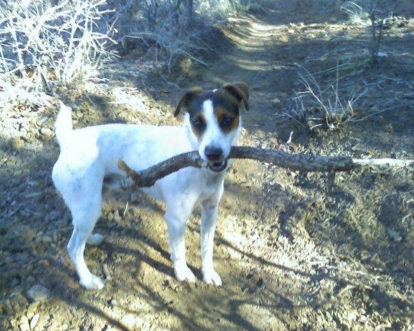 Lost Dog - Downtown Durango-frankie.jpg
