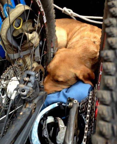 How to train a trail dog?-franky-post-ride.jpg