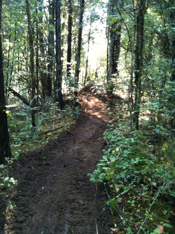 Morrison Trail Blazer Re-Birth II-fresh-cut-trail.jpg