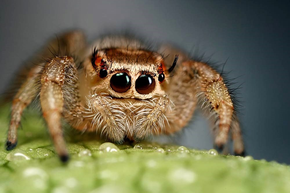 evil insects and other creepy crawly things-friendly-jumping-spider.jpg
