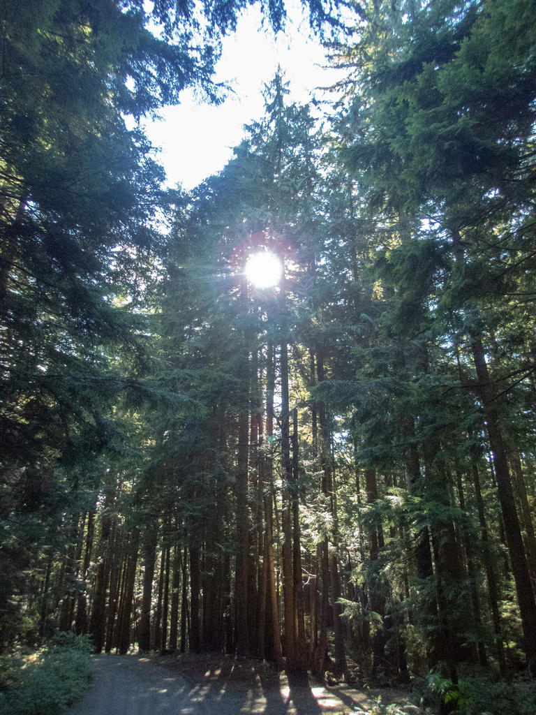 did you ride today?-fromme-oct-10-2018-9.jpg