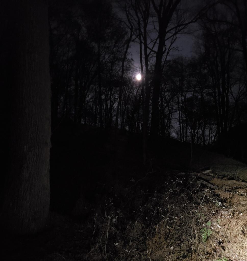Just Received;  Fireflies E01 ( 10 / 2019 )-fullmoonfever.jpg