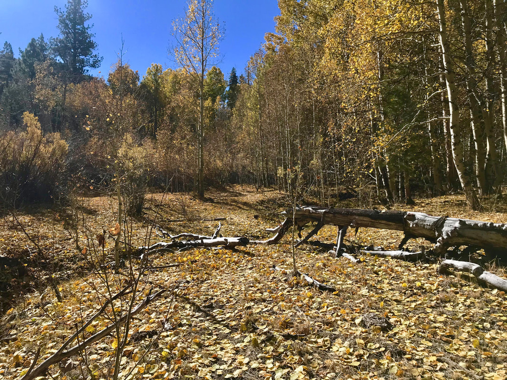 Tahoe to Mammoth Trail - looking for singletrack-fullsizeoutput-9f02_orig.jpg