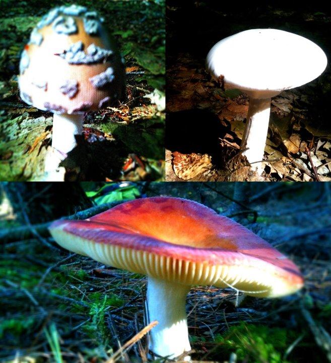 FUNgus.-fungus.jpg