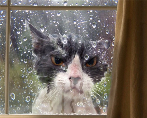 Unsatisfying Pics/Gifs-funny-cat-fails-511__605.jpg