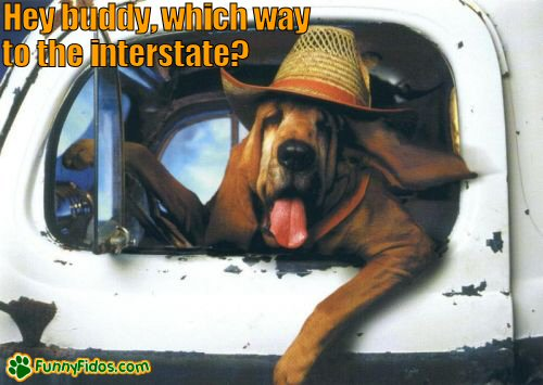 Name:  funny-dog-picture-which-way-to-the-interstate.jpg Views: 542 Size:  41.8 KB
