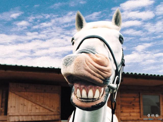 Anyone riding the Moon Tonight?-funny-farm-animals-16.jpg