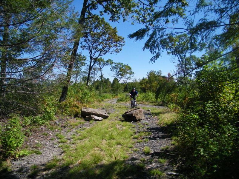 Roaring Creek With Mini & The Boy-fvdg.jpg