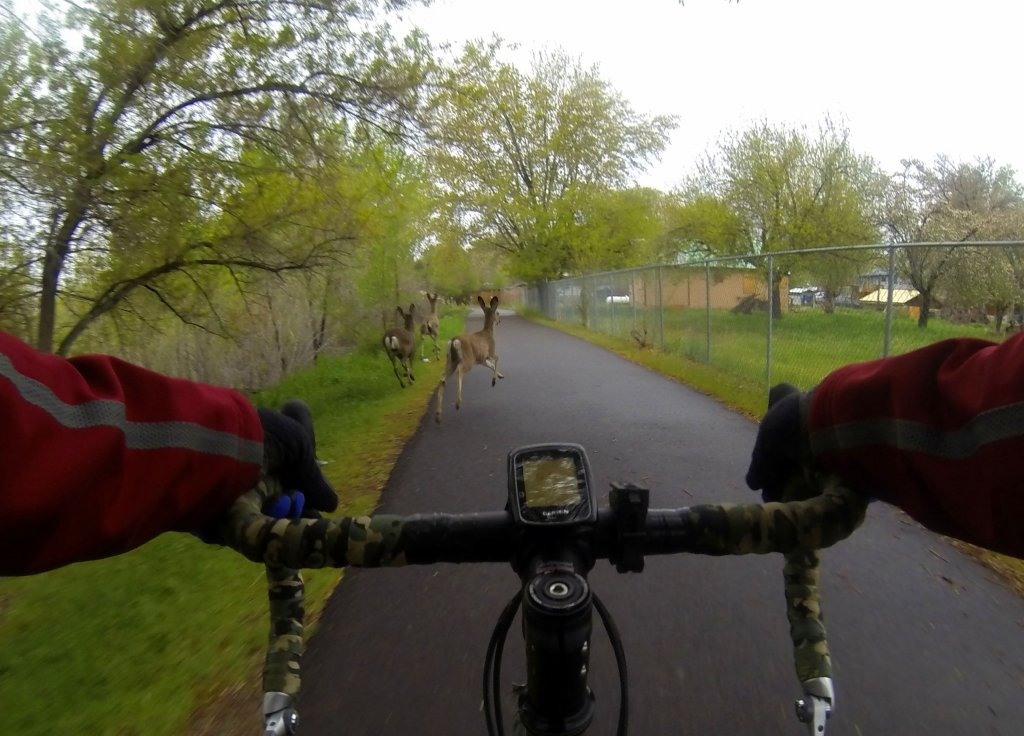 How many use a bike path on their commute?  (PICS)-g0016570.jpg