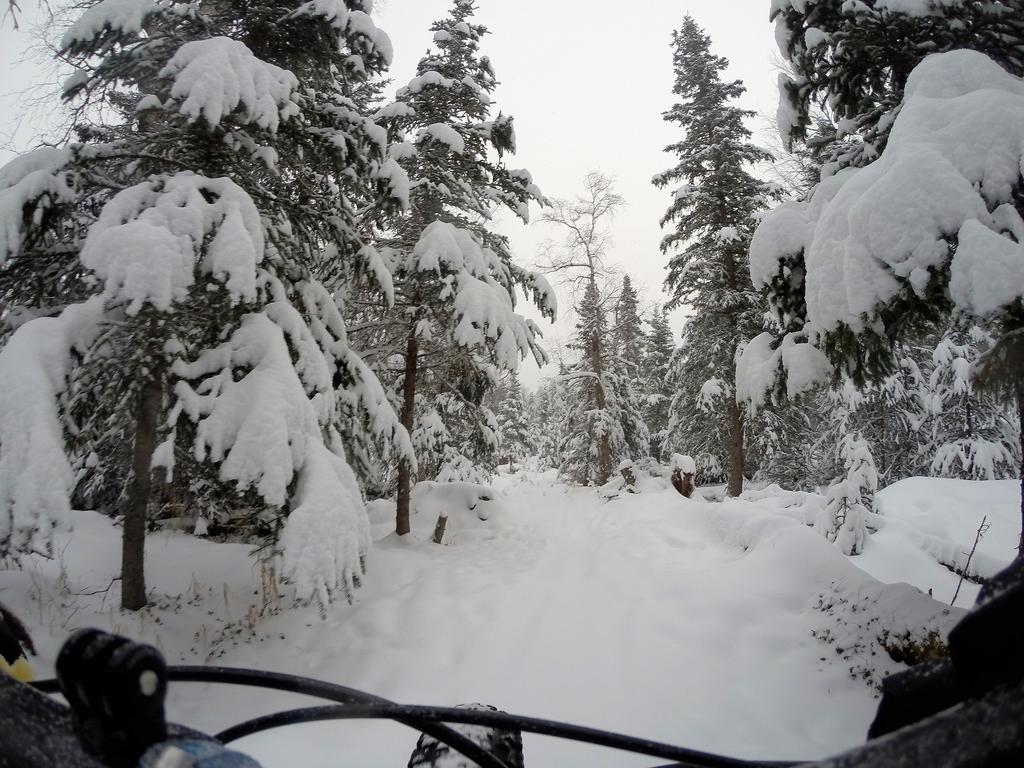 Daily fatbike pic thread-g0038476s.jpg