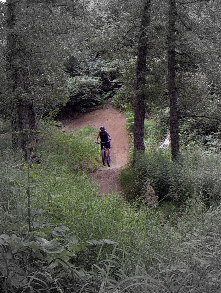 Do Fat Bikes shred single track?-g0071180-001.jpg