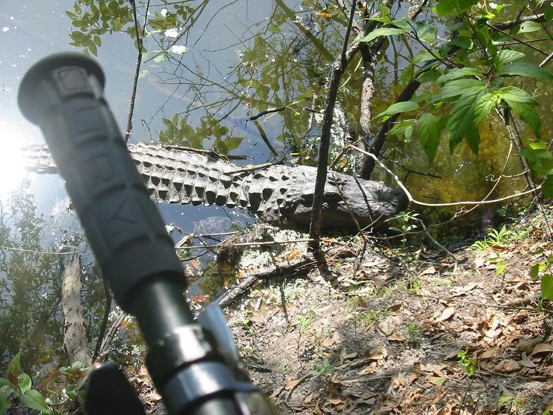 animal encounters-gator2.jpg