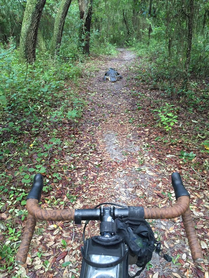 Cross Bikes on Singletrack - Post Your Photos-gator_zpst0xavxjd.jpg