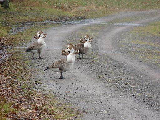 Pixels From Today's Ride..............-geese.jpg
