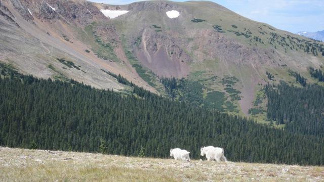 Colorado TR-georgia4.jpg